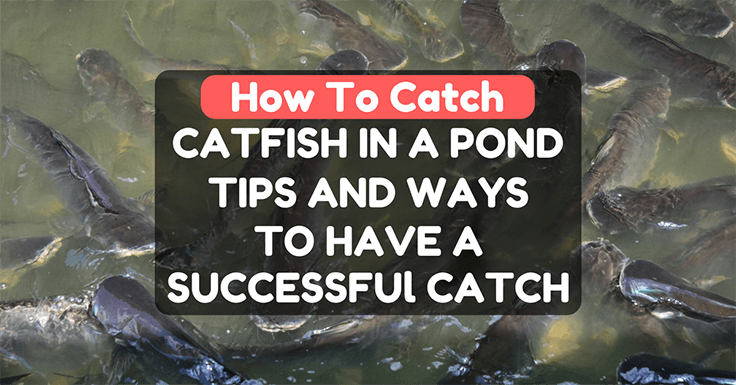 How To Catch Catfish In A Pond