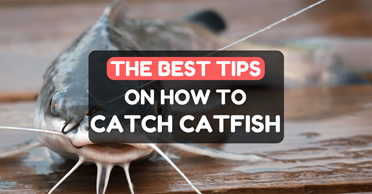 How To Fish Catfish