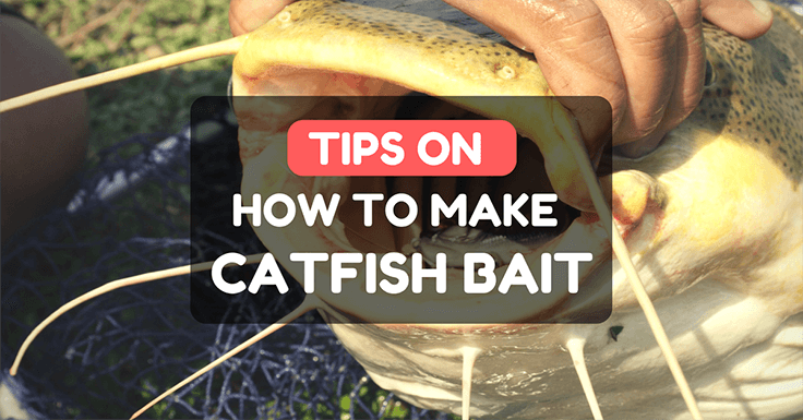 How To Make Catfish Bait