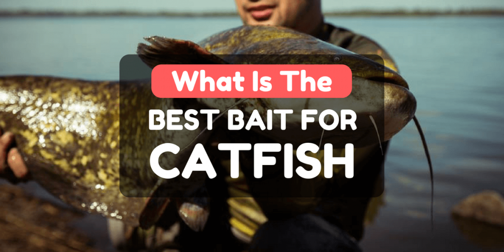 What Is the best bait for catfish