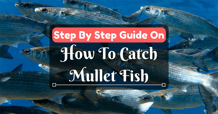 Step by step guide on how to catch mullet fish for How to fish