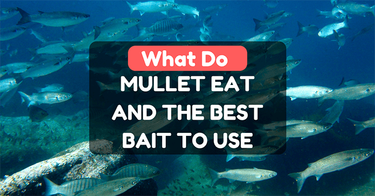 What Do Mullet Eat