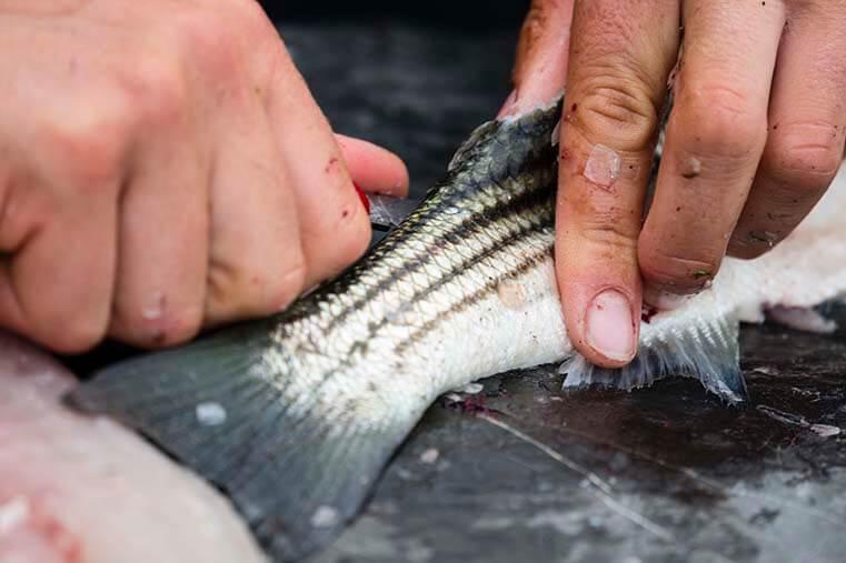 how to prepare fresh catfish