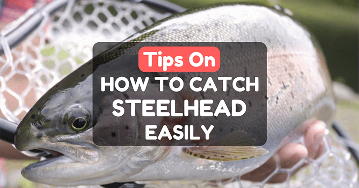 How To Catch Steelhead