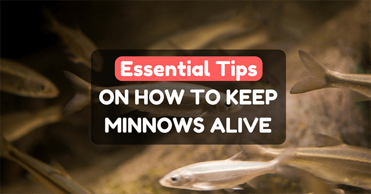 How To Keep Minnows Alive