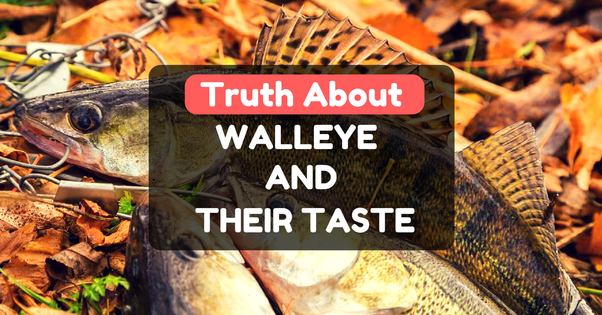 what does walleye taste like