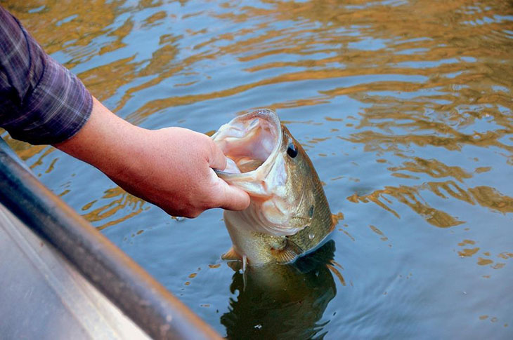 Landing Largemouth Bass