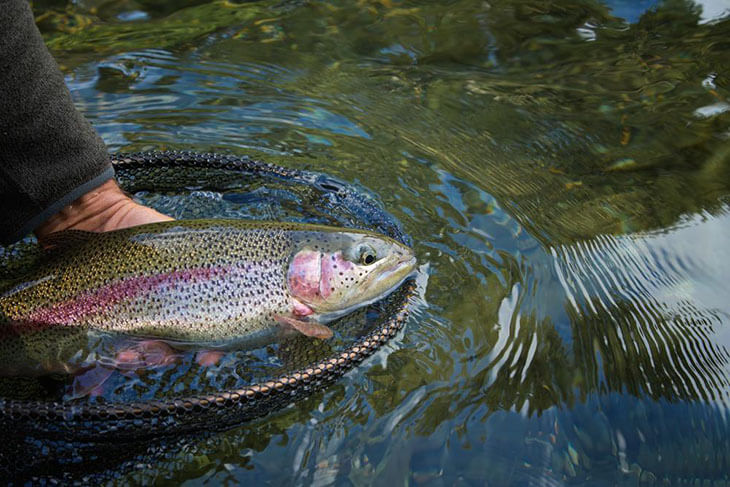 How to fish for rainbow trout efficiently for How to fish for rainbow trout