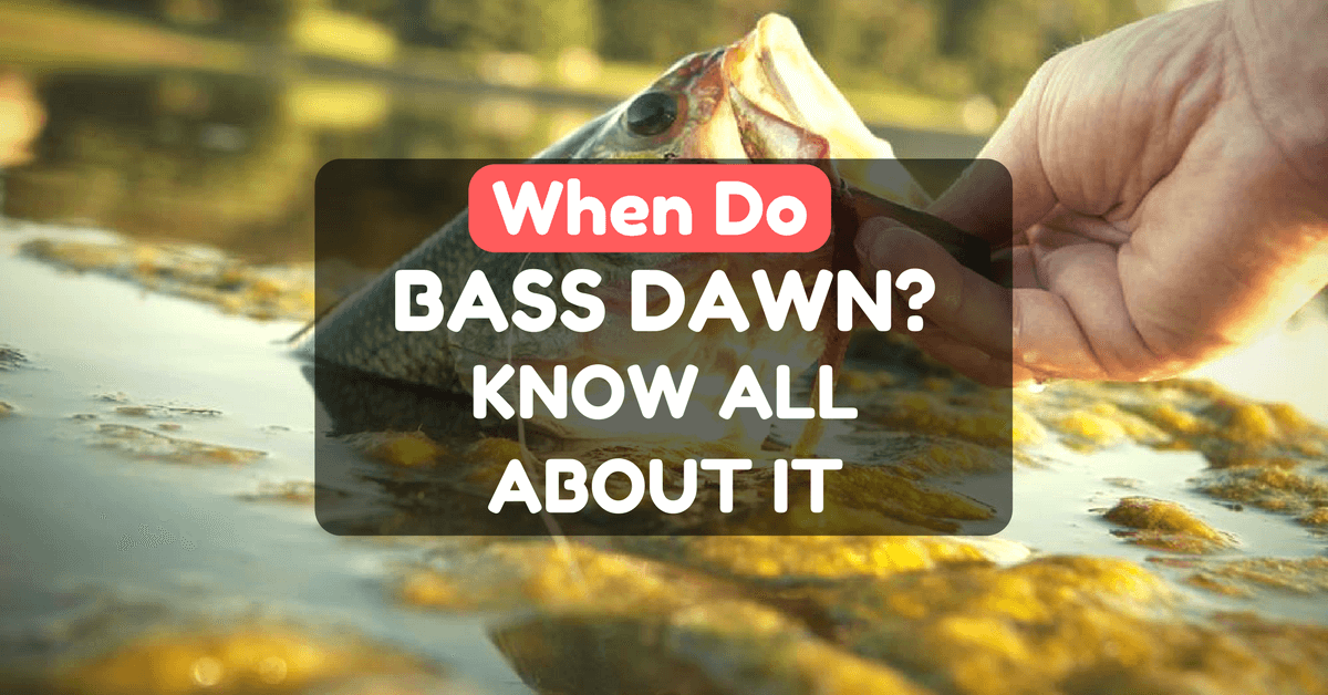 when do bass dawn