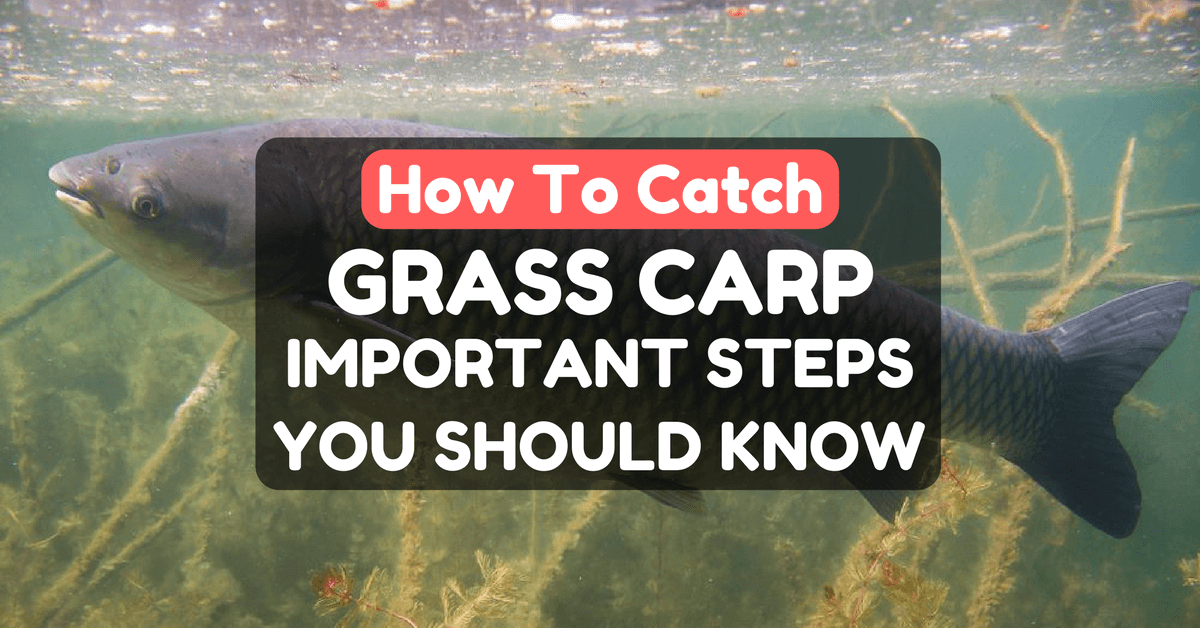 How To Catch Grass Carp